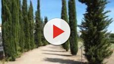 3 escolas filosóficas e suas contribuições pedagógicas para a sociedade, vídeo