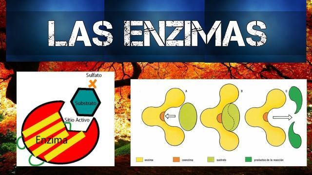 Nueva tecnología para diseño de enzimas