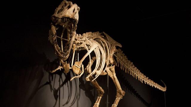 Subastaran el esqueleto de un dinosaurio en Francia