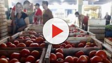 Consumidor deve redobrar atenção à alimentação após greve de caminhões, vídeo