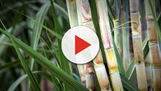 Temer anuncia investimento em biocombustíveis
