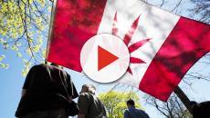 Il Canada si prepara a legalizzare la marijuana per scopi ricreativi