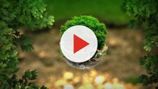Olio di palma, via dai biscotti ma rimane l'impatto sull'ambiente
