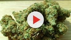 Consiglio Superiore della Sanità ha deciso: No alla cannabis light