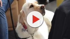 Lucca: paziente in coma quasi vegetativo reagisce grazie alla Pet Therapy