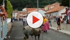 Portuguese bullfighter with small child in his arms caught on video