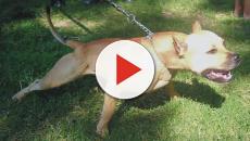 VIDEO: Siete perros atacan a hombre de 87 años de edad