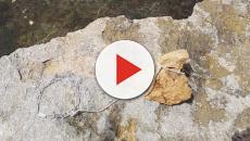 Trapani, cane in mare con una pietra al collo: denunciato il proprietario