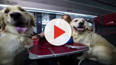 Biglietti gratis per cani di grossa taglia su treni Italo