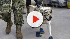 Vídeo: Develan la estatua en honor a Frida la perra rescatista de México