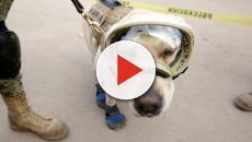 Frida, la perra rescatista mexicana, ya tiene una estatua