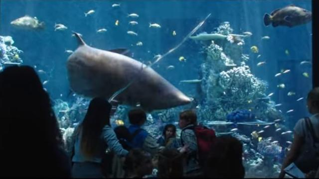 'Aquaman' spoilers: New trailer shows Arthur Curry communicating with sharks