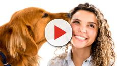 Dogs may truly understand how you feel - study