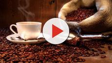 Programa de Qualidade: o prazer de degustar um café Gourmet