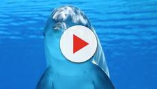 EE.UU./ Ofrecen 9.800 euros para dar con quien mató a una delfín embarazada