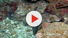 San Antonio aquarium's stolen shark recovered by police in Texas