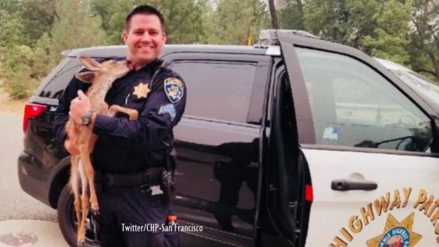 California wildfires: Baby deer saved by Highway Patrol 'kisses' rescuer