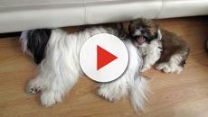 Os significados de sonhar com cachorro