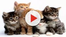 Lavoro: in Grecia si cerca un accarezzatore di gatti