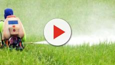 Monsanto, risarcimento record per un giardiniere ammalatosi di cancro