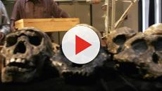 VÍDEO: Homo erectus extintos a consecuencia de la pereza