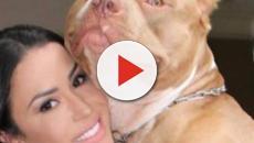 Leo Dias esclarece que a sogra de Gracyanne Barbosa foi mordida pelo cão