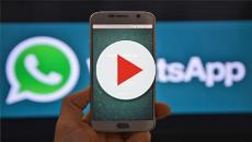 Sale una aplicación para saber quien visita tu foto de perfil en whatsapp