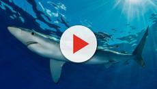Chieti, giovane 24enne morso da uno squalo blu