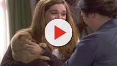 Il Segreto: Sanson, il cane di Julieta, muore misteriosamente