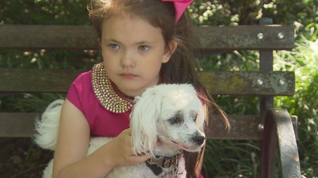 Bimba porta il cane a spasso da sola, la vicina chiama la polizia a Chicago