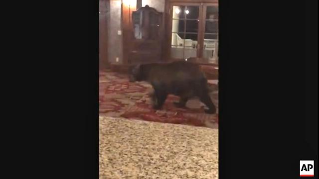 Bear seen exploring the Stanley Hotel and other Stephen King stories