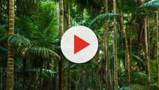 A importância da biodiversidade brasileira para o mundo