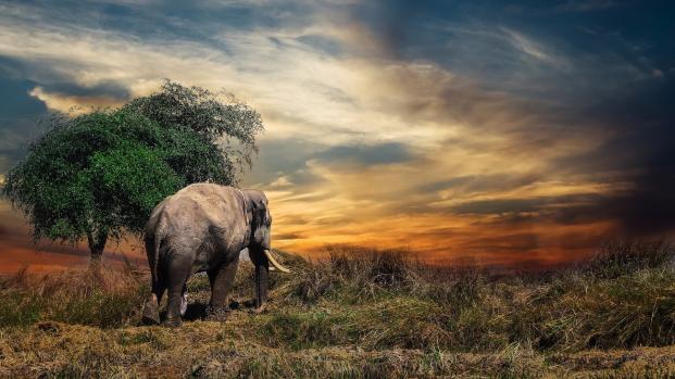 Botswana, ritrovate 87 carcasse di elefenti uccisi dai bracconieri