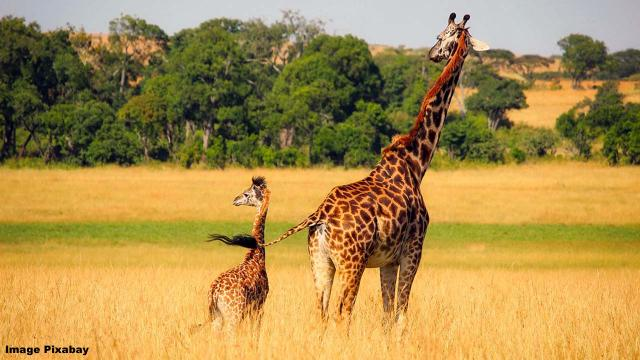 Giraffe attacks woman and 3-year-old son, critically injuring them
