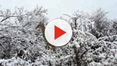 Neve atinge África do Sul e imagens lindas são registradas