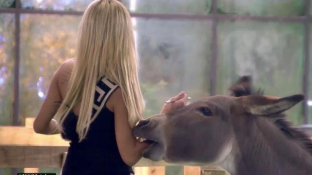 La entrada de Oriana en GH VIP 6: Le muerde un burro y huye de un avestruz