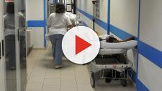 Cosenza, medico licenziato per aver pulito delle seppie in ospedale