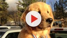 ESTADOS UNIDOS/ Un perro es elegido alcalde de una pequeña ciudad de California
