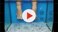 Pedicure con i pesci: ragazza costretta ad amputare parte del piede