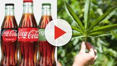 Coca-Cola considering entering the CBD-infused beverage market
