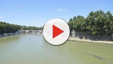 Roma: segnalata la presenza di un grosso rettile nel Tevere, ricerche negative