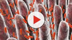 Scoperta una molecola che facilita la cura delle patologie intestinali