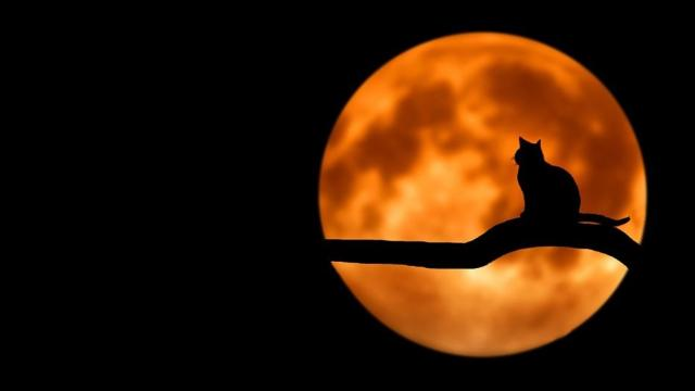 London: Croydon Cat killer investigation outcome disputed by animal welfare
