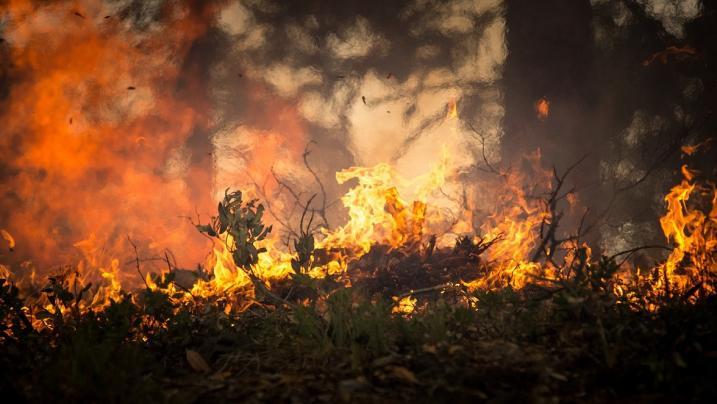 Pisa: divampa un pauroso incendio, forse di origine dolosa
