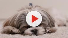 Hundebabys berühren die meisten von uns tief - Jetzt heißt es schwelgen: