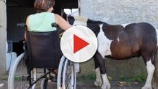 Le cheval, un compagnon idéal pour tous