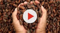 5 nuevos motivos para consumir cacao