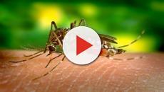 Sanidad confirma dos casos de dengue en España