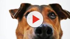 Un bambino salva la vita ad un cagnolino