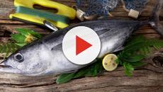 VÍDEO: 5 razones por las que se recomienda consumir pescado azul